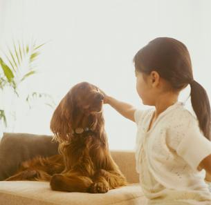 犬と女の子の写真素材 [FYI04038029]