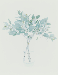 花瓶に活けた植物の写真素材 [FYI04038062]