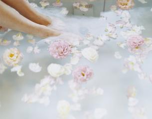 花を浮かべたバスタブと女性の足の写真素材 [FYI04038101]
