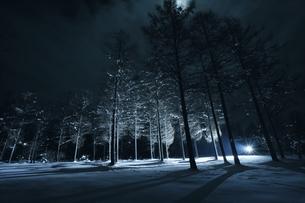 夜の雪の中で強い光に照らされる木々の写真素材 [FYI04039992]