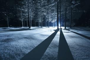 夜の雪の中で強い光に照らされる木々の写真素材 [FYI04039993]