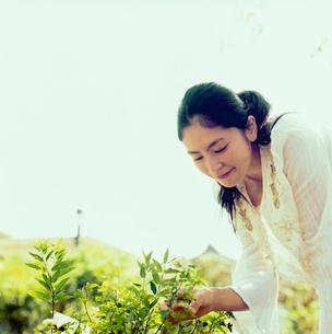 草木に触れる20代日本人女性の写真素材 [FYI04040073]