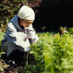 畑の中にしゃがみこむ日本人女性の写真素材 [FYI04040124]