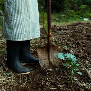 畑作業をする女性の足元の写真素材 [FYI04040126]