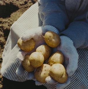 収穫したジャガイモを抱える日本人女性の手元の写真素材 [FYI04040131]