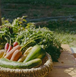 収穫された野菜の写真素材 [FYI04040134]