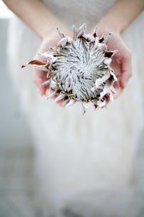 女性の手のひらに乗せた花の写真素材 [FYI04040564]