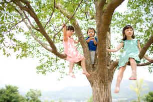 木の上の子供達の写真素材 [FYI04040837]