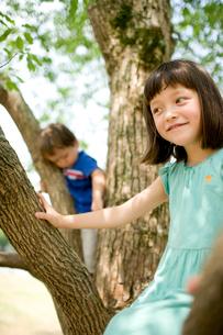 木の上の子供達の写真素材 [FYI04040838]