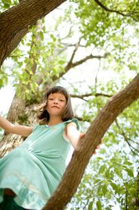 木の上の女の子の写真素材 [FYI04040839]