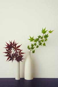 花瓶にいけた紅葉の写真素材 [FYI04040999]
