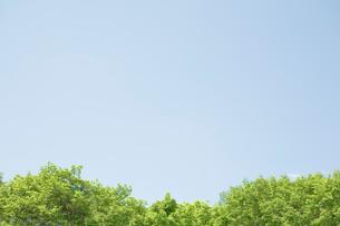 新緑の樹木と空の写真素材 [FYI04041153]