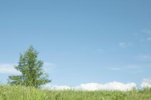 草原と空と雲と一本の木の写真素材 [FYI04041162]