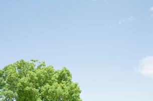 新緑の樹木と空の写真素材 [FYI04041166]