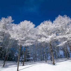 樹氷の写真素材 [FYI04041205]