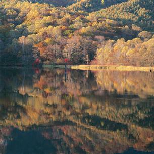 紅葉の森を映し出す鏡池の写真素材 [FYI04041217]