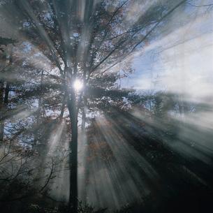 朝 木漏れ日の写真素材 [FYI04041229]