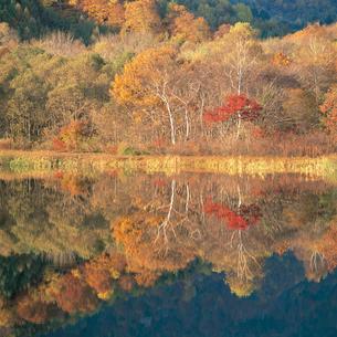 湖面に映る紅葉の写真素材 [FYI04041259]