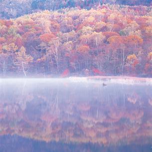 湖面に映る紅葉の写真素材 [FYI04041266]