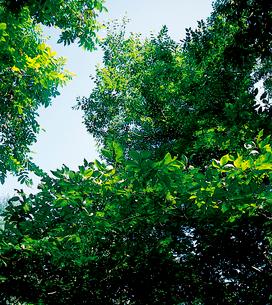 山地のエゾエノキの写真素材 [FYI04041271]
