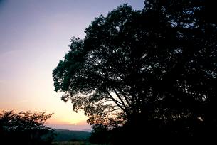 城趾に植えられた大エノキの写真素材 [FYI04041277]