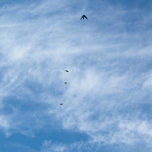 ツバメを追尾するオオムラサキのオス3頭の写真素材 [FYI04041288]