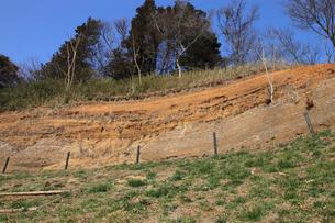 木下貝層 貝が表面に露出している様子 十二万年前の地層 貝化の写真素材 [FYI04044139]