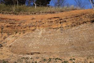木下貝層 貝が表面に露出している様子 十二万年前の地層 貝化の写真素材 [FYI04044140]