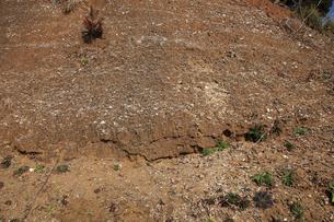 木下貝層 貝が表面に露出している様子 十二万年前の地層 貝化の写真素材 [FYI04044145]