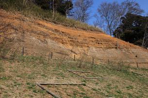 木下貝層 貝が表面に露出している様子 十二万年前の地層 貝化の写真素材 [FYI04044152]