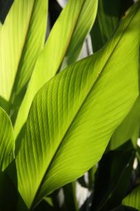 ブラジルの新緑の写真素材 [FYI04045992]