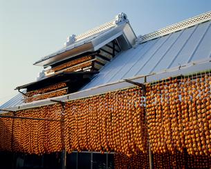干し柿造りの写真素材 [FYI04046557]