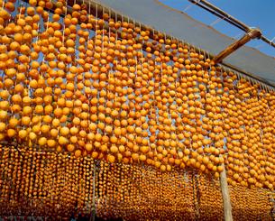 干し柿造りの写真素材 [FYI04046773]