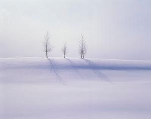 雪原の木の写真素材 [FYI04046860]