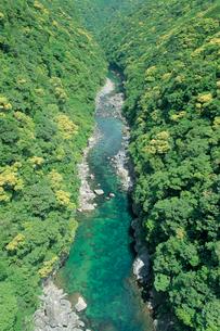 安房川渓谷の照葉樹林の写真素材 [FYI04046952]