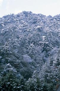 雪のヤクスギの森の写真素材 [FYI04046953]