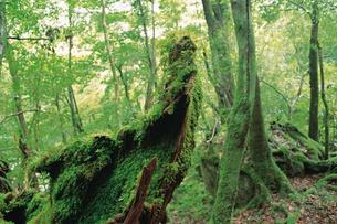 苔むした森の写真素材 [FYI04046958]