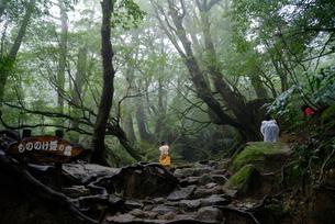 「もののけ姫の森」とも呼ばれる白谷雲水峡の森をゆく登山者の写真素材 [FYI04046994]