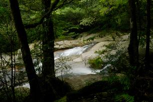 原生状態の照葉樹林と花崗岩の谷を流れる白谷川の表情が変化に富の写真素材 [FYI04047043]