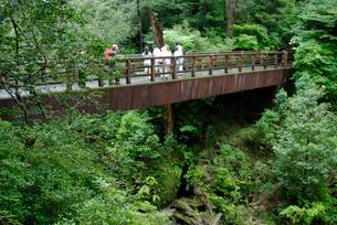 林泉橋 最初に渡る遊歩道の橋 森と流れが美しいの写真素材 [FYI04047074]