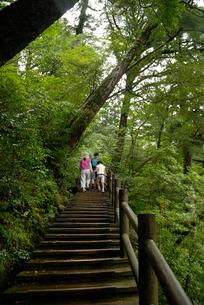 50分コースの遊歩道(50分、30分コースは遊歩道が整備されの写真素材 [FYI04047083]