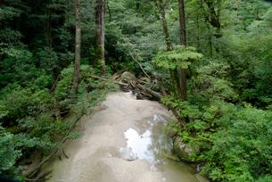 林泉橋の谷 花崗岩の転石や流木、砂礫の堆積も見られる代表的なの写真素材 [FYI04047106]
