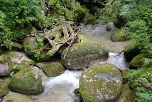 林泉橋の谷 花崗岩の転石や流木、砂礫の堆積も見られる代表的なの写真素材 [FYI04047107]