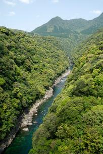 照葉樹林に覆われた安房川下流の渓谷の写真素材 [FYI04047167]