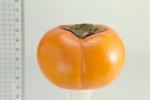 カキ 品種:富有柿の写真素材 [FYI04047551]