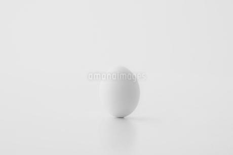 Chicken egg on white background. Fresh chicken egg image.の写真素材 [FYI04047552]