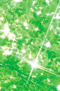 新緑と光の写真素材 [FYI04047808]