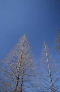 樹木と青空の写真素材 [FYI04047909]