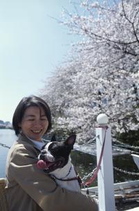 ボストンテリアを抱える日本人中高年女性と桜並木の写真素材 [FYI04047921]