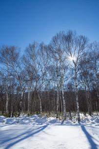 冬の白樺林の写真素材 [FYI04049513]